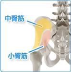 股関節痛の原因予防・回避