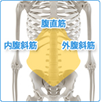 腹部のシェイプアップ