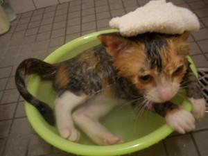 猫の半身浴